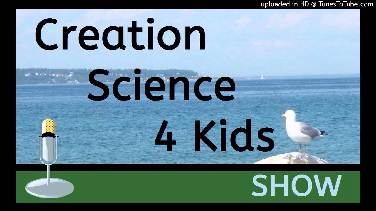 Cheri Fields   Creation Science 4 Kids